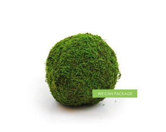 SALE! 6 Inch Moss Ball Preserved
