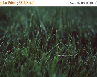 Christmas in July Wet Grass Fine Art Photography Whimsical Dreamy Green Water Drops Dew Abstract Spring Summer Minimalist Monochromatic Home