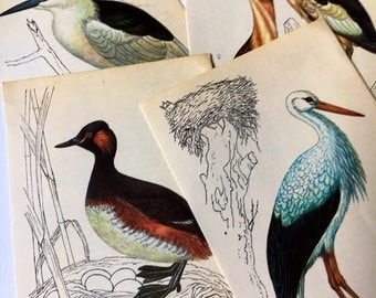 Vintage Bird Illustrations Book Pages B