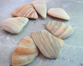 Pendant Sea Shell Fragments for Jewelry or Crafts, Undrilled Beach Tumbled Striped Clam Shell Pieces from Texas, Grey, Beige and Cream