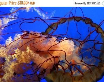 On Sale Jellyfish, Gatlinburg Aquarium, TN