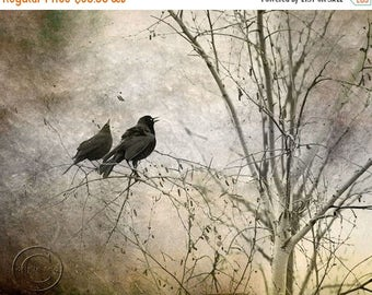 ON SALE Blackbird Print, Pair of Blackbirds, Surreal, 2 Blackbirds, Two Black Birds, Mysterious Blackbird Print, Fine Art Photography