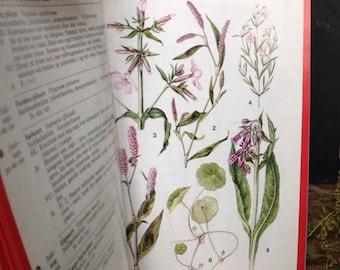 ON SALE Vintage book on flowers botanic plants print