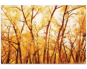 Landscape Photography 'Fall Trees' by Meirav Levy - Autumn Nature Art Contemporary Fall Trees Decor on Metal or Plexiglass