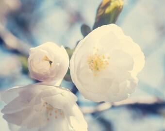 SALE Cherry blossom art, flower photography, canvas wall art, canvas art, white art, large art, large wall art, soft wall art,white wall art