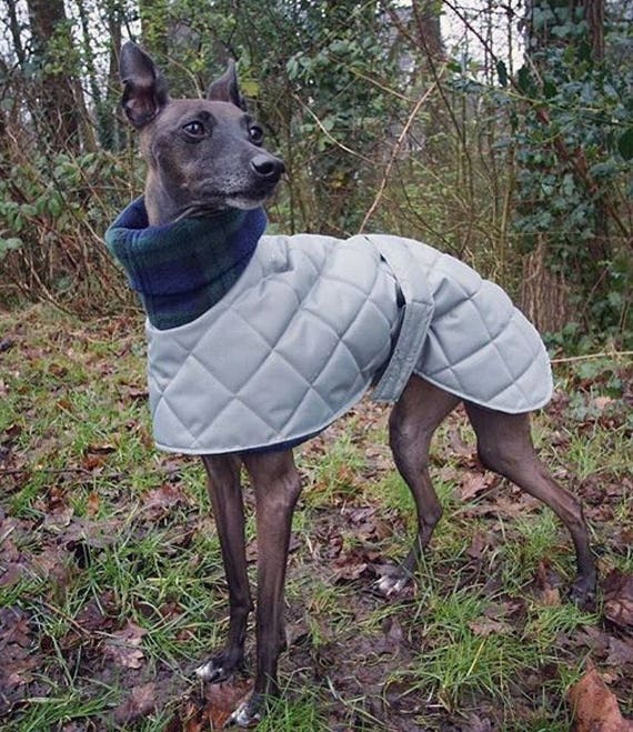 Waterproof fleece lined whippet coats in a limited edition colour