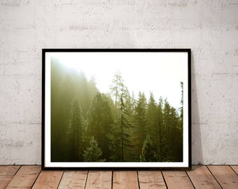 """redwood photography print / green yellow large wall art / nature forest California landscape photo print / """"golden redwood forest"""""""