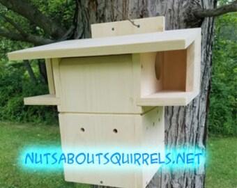 Squirrel Condo