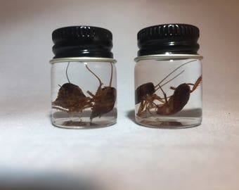 Vial of Small Roaches
