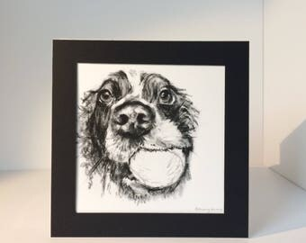 SALE Spaniel print. I Fetched It, square Giclee print of a Springer Spaniel with Tennis Ball on 255gsm Somerset Velvet Watercolour paper