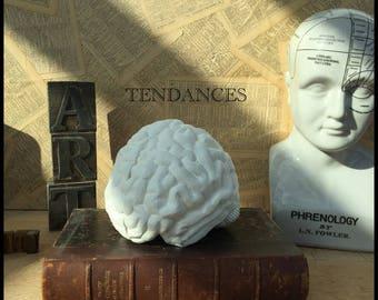 Serre livre cerveau en plâtre blanc hemisphere droit et gauche