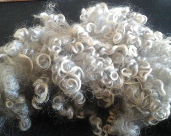 GREY LEICESTER LONGWOOL washed locks British rare breed vulnerable status