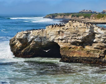 Color Photo of the Natural Bridges Beach and Bird Sancturary near Santa Cruz, CA, Ocean Waves and a Seagull Flying, 11 x 14 Forever Print