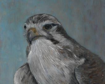 Peregrine Falcon Original Oil Painting