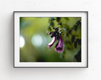 Fine Art Photography, Flower Photography, Purple Floral Art, Nature Wall Art, Photo Print, Floral Print, Botanical Art, Nature Prints, Green