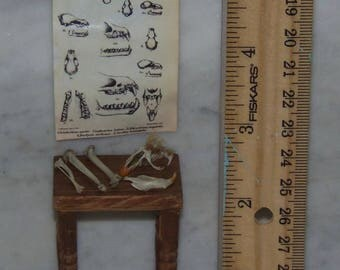 1:12th Dollhouse.  Real bones.  Display of Mammal Bones and Wall Chart.  Vintage Table Included.