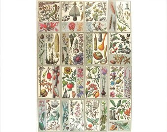 Wonderful plants, Set of 32 Soviet Unused Postcards, Flower, Flora, Illustration, Vorontsova, Vintage, USSR, Soviet Union, 1989