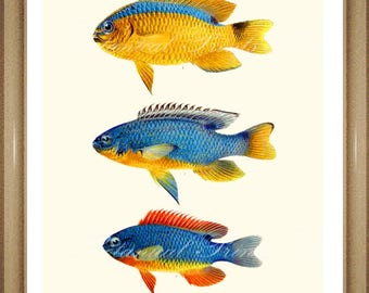 "Fish Wall Art. Tropical Fish Print. Bathroom Wall Art. Damselfish. 5x7"", 8x10"" 11x14"""