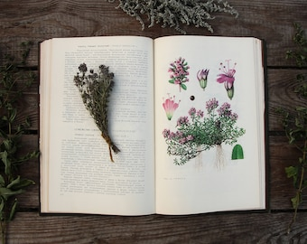 Wild Medicinal Plants of the USSR - 153 drawings (In Russian) - Vintage Botanical Book, Hardcover 1976. Drug Herbs Flower illustration Print