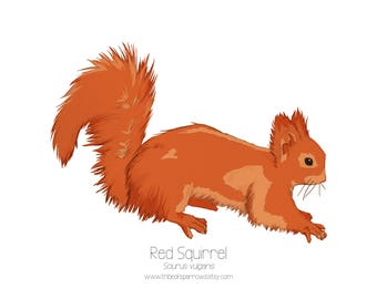A5 Red squirrel Print