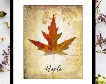 MAPLE LEAF Printable: Autumn Print, Fall Leaves, Vintage Collage, Fall Decor, Autumn Decor, Leaf Print