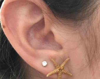 Small Real Starfish Earrings