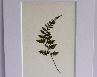 SALE Real Pressed Fern Botanical Art Herbarium of Japanese Painted Fern 3x5