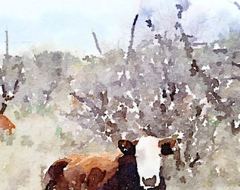 Cow-Bedded