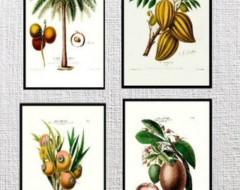 Set of four Flore D'Amerique Floral prints from the 1800's Plates 65,66,67,68