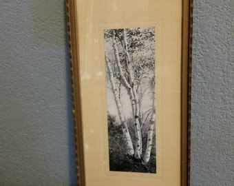 EARLY 1900'S  Black & White ILLUSTRATION Of Birch Trees in Original Handmade Wood Frame
