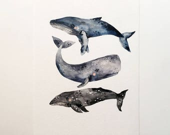 Original watercolor illustration, Whale