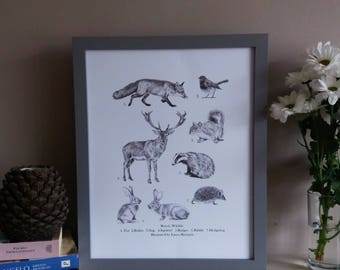 Wildlife print | British wildlife print | Animal print | wildlife giclée print | Fox print | Stag print