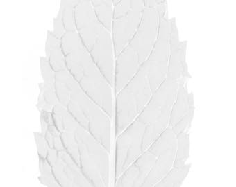 White Mint Leaf / Macro Close Up / Digital Download / Black and White Photo