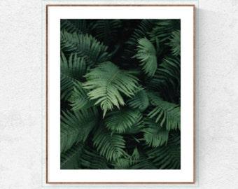 Fern poster, fern print, fern wall decor, fern printable, fern photo, botanical poster, green fern, fern art, fern wall art, fern leaves