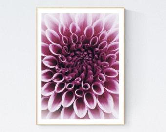 Dahlia print, dahlia poster, dahlia photo, dahlia wall art, dahlia decor, dahlia flower, pink dahlia, dahlia closeup, dahlia bedroom art