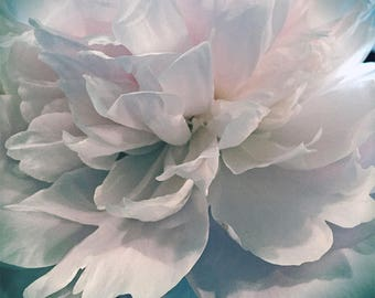 Ethereal Flower Photo, Peony, Modern Wall Art, Nature Photography