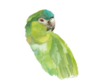 Green Parrot Original Watercolor (Limited Edition Giclee Print)