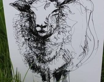 Sheep - printed greetings card