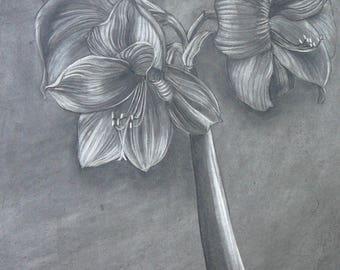 Amaryllis  Charcoal/eraser drawing-unframed