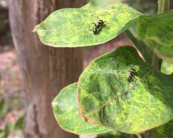 ant ant city