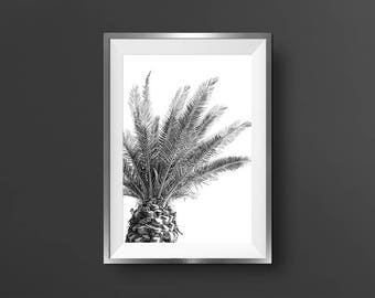 Palm Tree Print Black And White Tropical Tree Print Palm Tree Wall Art Palm Tree Photo Tropical Decor Palm Print Art Modern Minimalist Gift