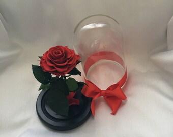 PRESERVED ROSE in glass-20%CODE1925