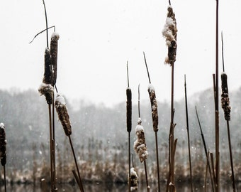 Winter on the Lake Photo Print