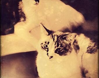 Vintage Cats: Canvas Wall Art