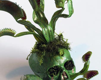 Carnivorous plant/Faux venus fly trap infested skull