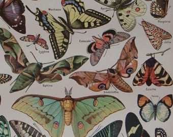 BUTTERFLIES (PAPILLONS) Vintage French original book plate by Adolphe Millot, Larousse Universel Published 1909