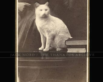 """1870s CDV of a Wisconsin Cat with """"Hidden"""" Mother"""