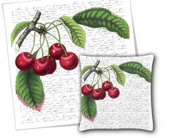 "Red Cherries French Typography 12x12"" Digital Image Download"