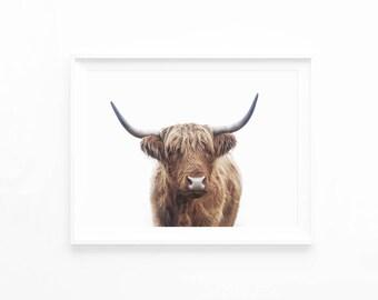 Highland Bull Print, Highland Cow Printable Wall Art Photography, Southwester Decor, Rustic Farm Decor, Printable Download Art Poster, hc2lc