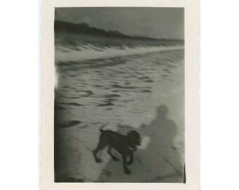 Vintage Photo Snapshot: Dog and Shadow (77591)
